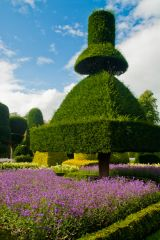 Levens Hall, More topiary oddities