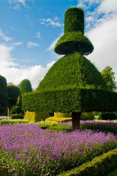 Levens Hall photo, More topiary oddities