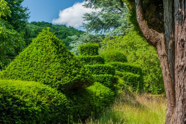 Little Malvern Court photo, Topiary in the Court garden