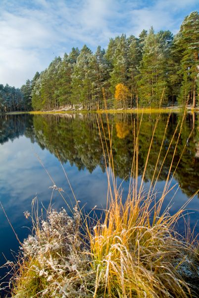 Cairngorms National Park - Photos and Historic Sites photo, Loch Garten