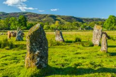 Lochbuie Stone Circle, Cows wander among the standing stones