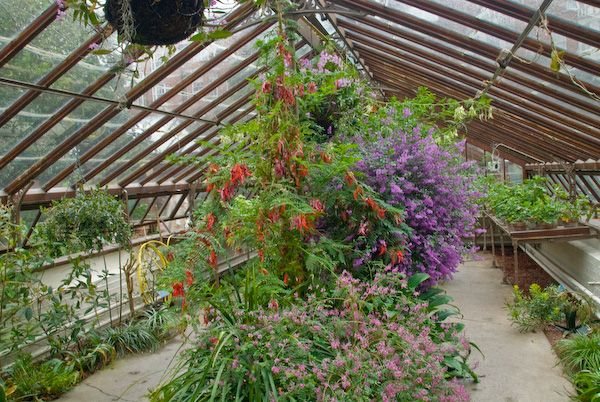 London photo, Chelsea Physic Garden greenhouse
