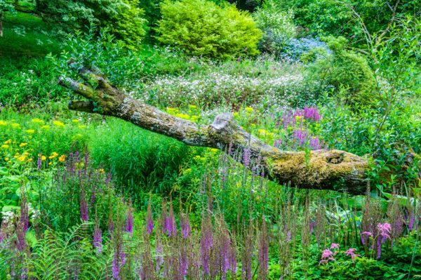 Marwood Hill photo, Another view of the Bog Garden