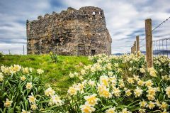 Daffodils in spring in front of the castle