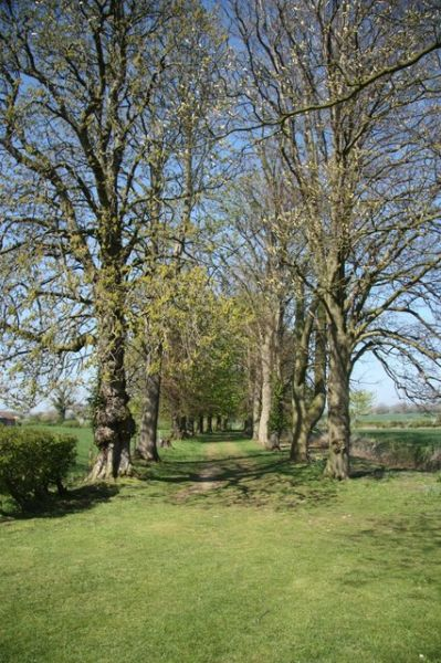 Monksthorpe Chapel photo, The avenue of trees leading to the chapel