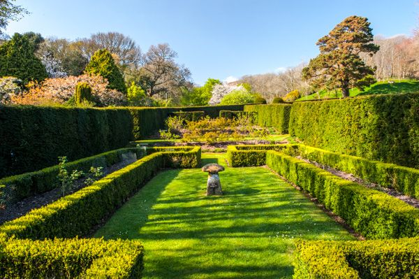 Mottistone Manor Garden photo, Clipped hedges