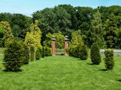 A garden gateway and young trees (c) Pam Fray