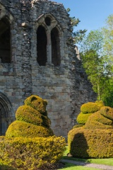 Topiary in the cloisters