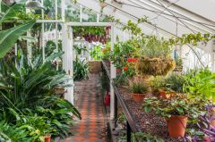 Inside a Victorian glasshouse