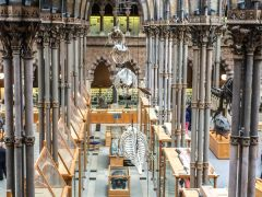 Oxford University Museum of Natural History, The museum interior