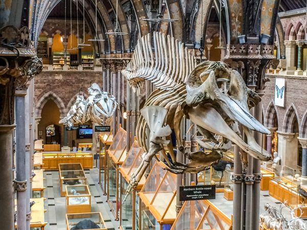 Image result for Oxford University Museum of Natural History