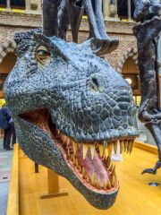 Oxford University Museum of Natural History, The ever-popular dinosaur exhibit up close!