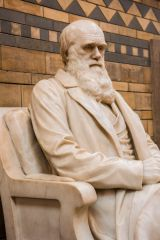 Charles Darwin statue on the main staircase