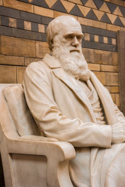 Natural History Museum photo, Charles Darwin statue on the main staircase
