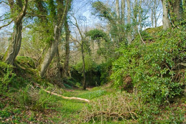 Nevern Castle  photo, Earthwork bank and ditch