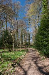 A woodland walk behind the house
