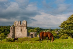 Horses grazing by the castle ruins