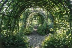 A shady garden tunnel