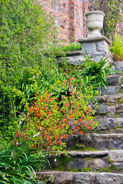 Penrhyn Castle photo, Garden steps outside the house