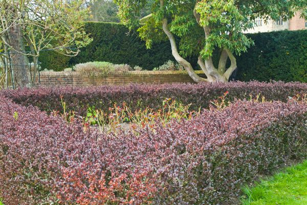 Penshurst Place photo, Flowering garden hedges