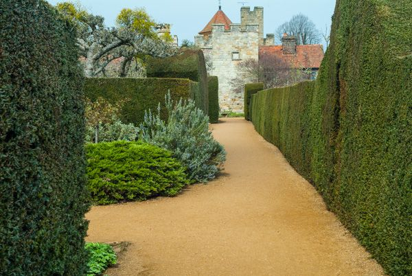 Penshurst Place photo, Clipped yew hedges near the house