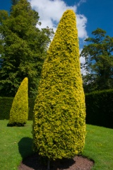 Clipped hedges and garden topiary
