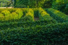 Port Eliot, The garden maze