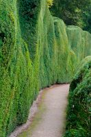 Clipped hedge path