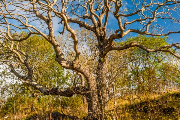 Rassal Ashwood NNR photo, A natural sculture of tree branches