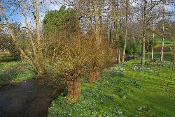 Rendcomb photo, Snowdrops beside the River Churn