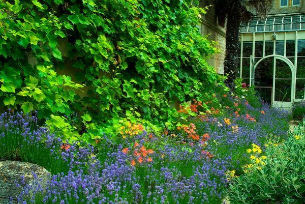 Rousham House and Garden photo, Colourful borders near the house