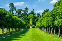 Sandringham, A formal avenue of trees in the gardens