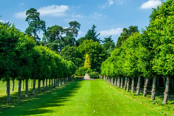 Sandringham photo, A formal avenue of trees in the gardens