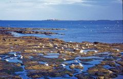 Seahouses, The rocky shore looking to the Farne islands (c) Christine Matthews
