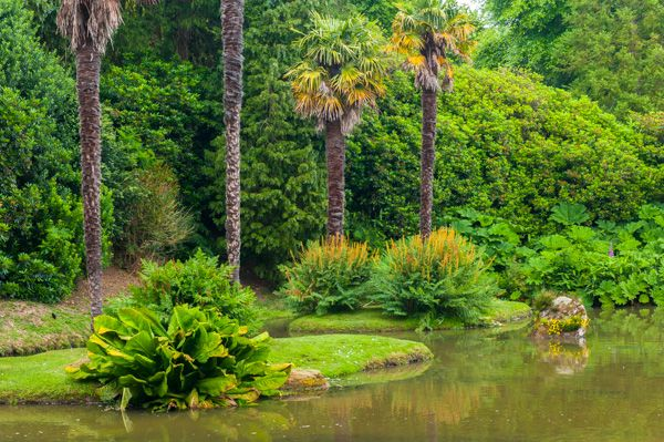 Sheffield Park photo, Palm trees beside the water