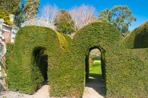 Somerleyton Hall and Gardens photo, Topiary garden arches