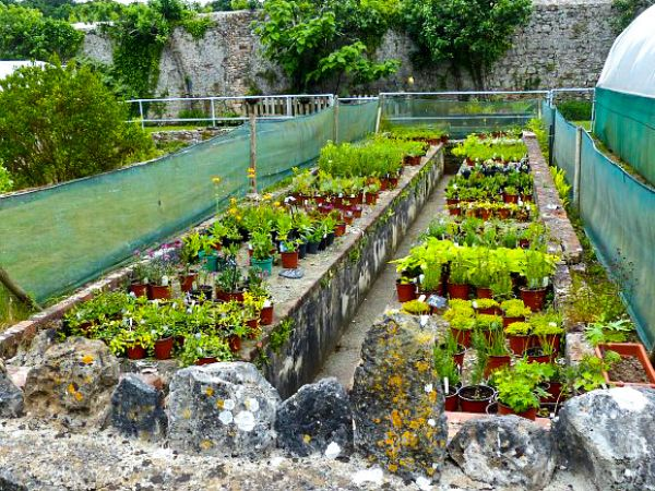 Stackpole Estate photo, Another look at the walled garden (c) Robin Drayton