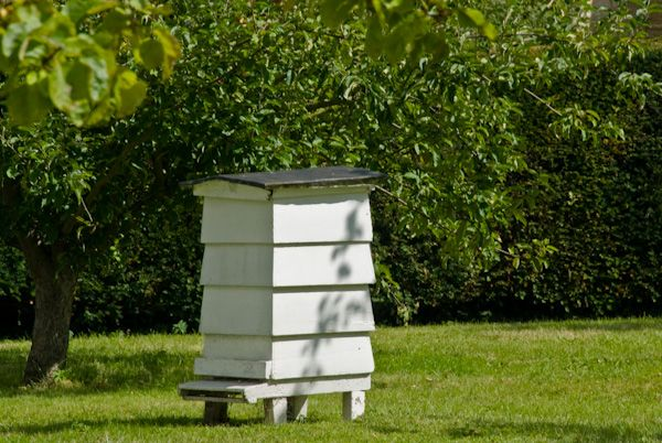 Sulgrave Manor photo, Beehive in the orchard