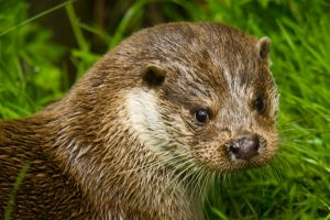 Tamar Otter & Wildlife Centre