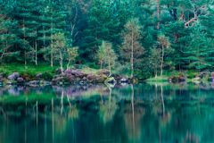 Tarn Hows, A quiet morning on the lake