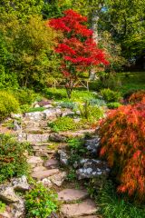 Stone path in the rock garden