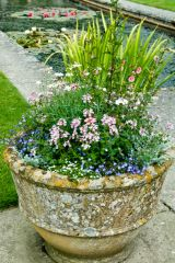 Tintinhull Garden, A garden pot by the pool