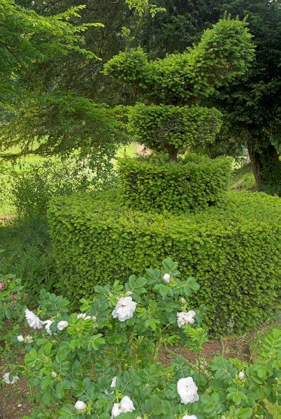 Upton House photo, Topiary in the gardens at Upton