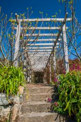 Ventnor Botanic Garden, The Fig Pergola