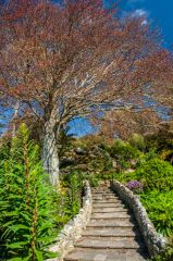 Ventnor Botanic Garden, Steps in the Mediterranean Garden