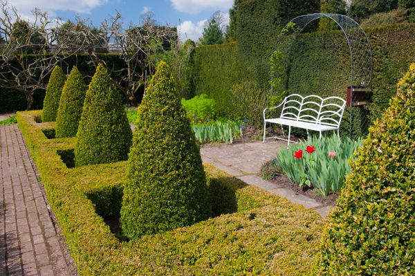 Waterperry Gardens photo, A row of topiary in a formal arrangement