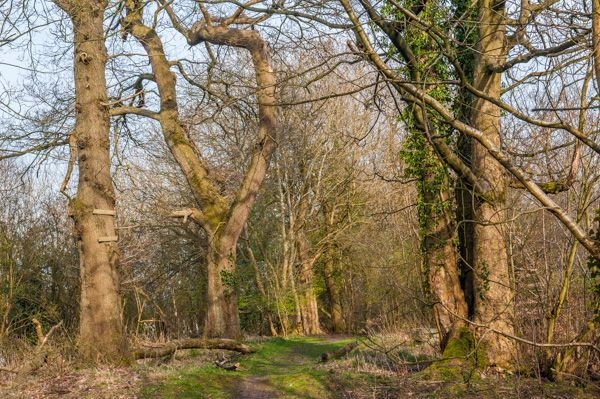 Watling Lodge (Antonine Wall) photo, The overgrown top of the Wall earthworks