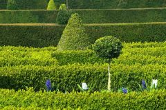 Westbury Court Garden, Topiary and clipped hedges