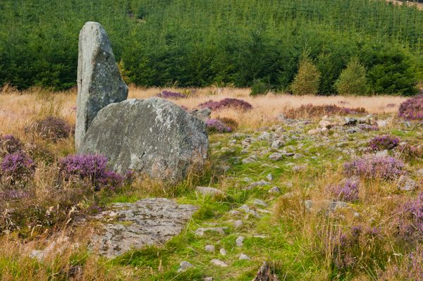Whitehill Stone Circle photo, Along the earthen bank