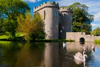 Whittington Castle, Swans in the moat